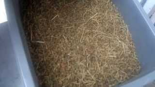 Ethiopian Spice Shop - ኢትዮጵያዊ ቅመማ ቅመም ሱቅ