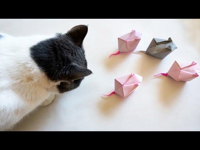 Как из бумаги сделать игрушку для кошки своими руками 48