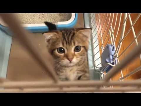 人間の呼びかけに鳴いて応える子猫