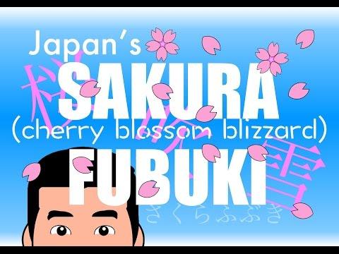 Japan's Cherry Blossom Blizzard (Sakura Series)