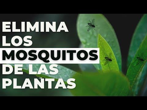 Consejito para eliminar los mosquitos de tus plantas GRATIS