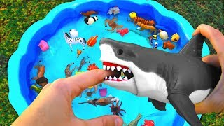 Learn Colors With Wild Animals Blue Water Shark Toys For Kids Children