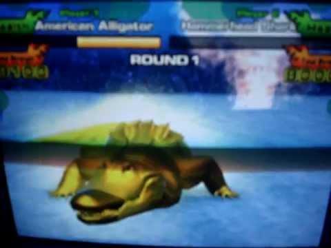 American Alligator Attacks Alligator 39 s Best Attack