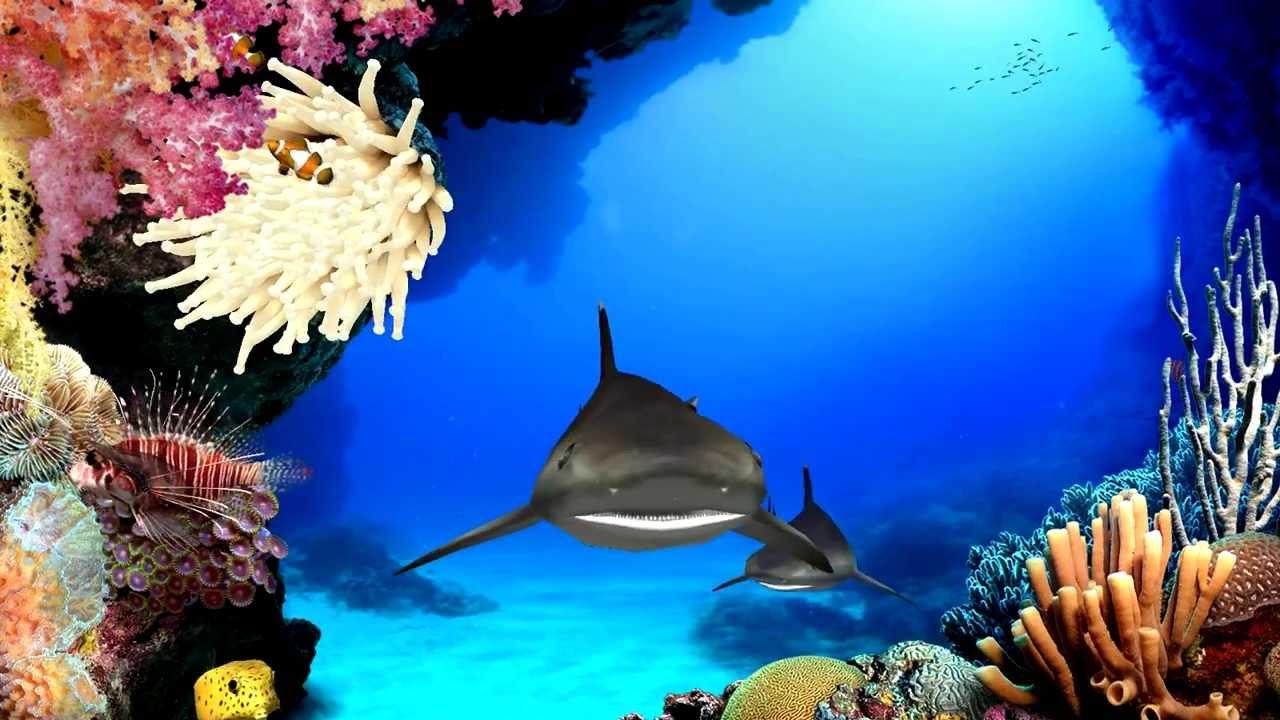 Digifish aqua real 2 1 04 eng key