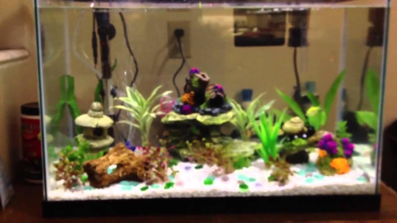 African dwarf frogs in my aquarium - YouTube