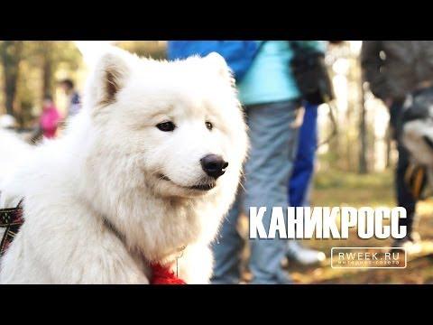 Каникросс - спорт с собакой [1080p]