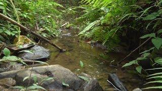 Hộp thư truyền hình (Số 133): Ô nhiễm môi trường nước ngày càng nghiêm trọng