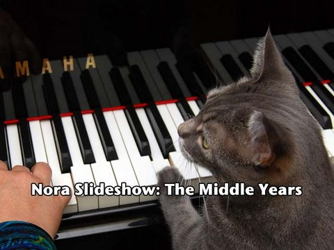 Nora Slideshow: The Middle Years Music Videos