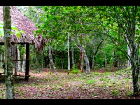 El Pilar Archaeological Reserve for Maya Flora and Fauna