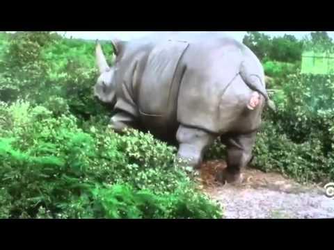 ace ventura rhino scene