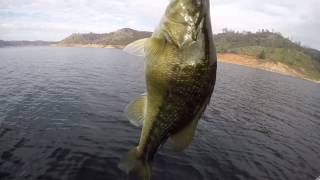 December Don Pedro fishing: deep water fishnig and GIANT DEFORMED SPOTTED BASS