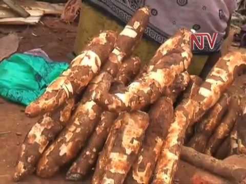 Unbs Sets Cassava Standards