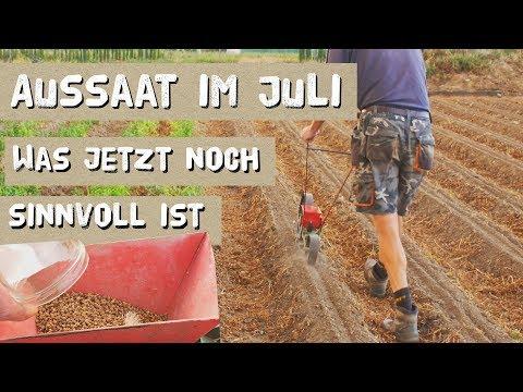 Aussaat Ab Juli - Was Jetzt Noch Klappt Im Garten.