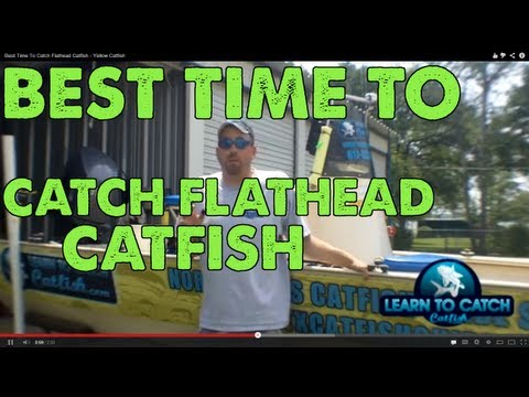 Best Time To Catch Flathead Catfish - Yellow Catfish