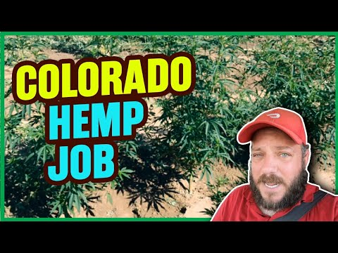 Working On A Hemp Farm Earning Money On The Road Van Life With Wanderlust Estate