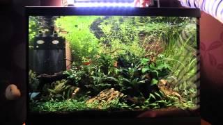 How I trim my stem plants