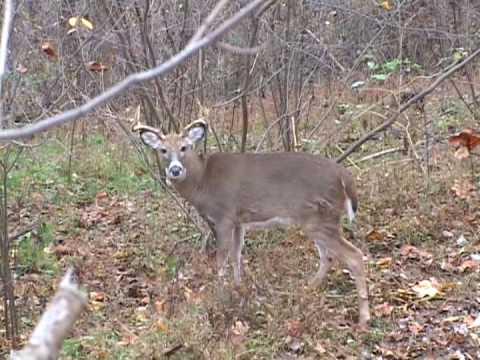 West virginia archery deer hunting youtube for West virginia out of state fishing license