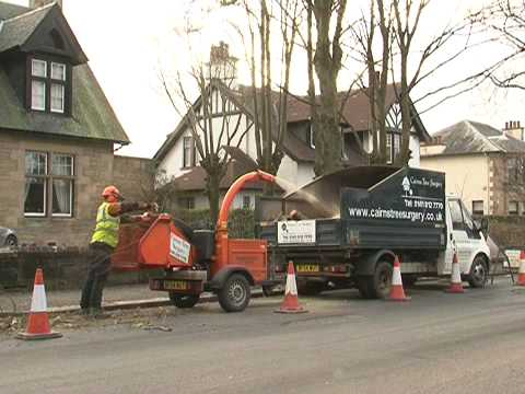 Cairns Tree Surgery - Tree Surgeons in Paisley