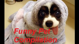 Funny Animal Vine Compilation Funny Pet Vines - Daily Dose of Fun