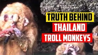 What are these creatures? (Thailand Troll Monkeys Explained)