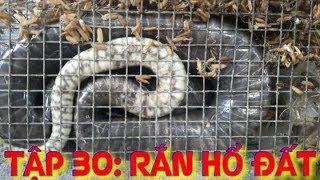 Tập 30: Kiếm tiền triệu mỗi ngày từ bẫy rắn hổ đất cực độc