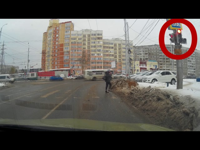 Dog Waits For Green Light To Cross The Street - Video