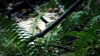 Rainforest Rain Sounds for Sleeping and Relaxation | Relaxing Sounds for Sleep Disorders