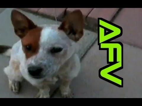 Home Videos - Part 226