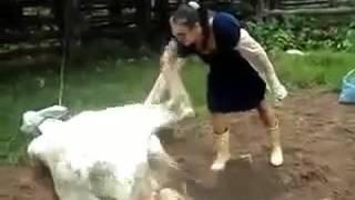 Vídeos Chistosos Cortos Para WhatsApp(10)