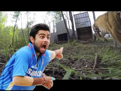 Bangladeshi Tiger Rape Indian Crickter video