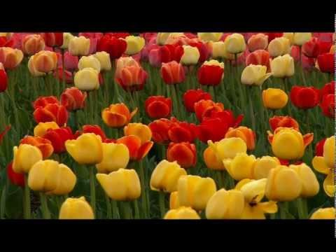 Musica relajante – JS Bach – Prelude, BWV. 846-1 – Ritsuko Kobata [Piano]