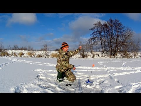 Вот что происходит когда жерлицы оставляешь без присмотра!  Первый лед, рыбалка на Жерлицы.