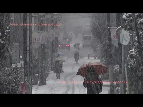 Japan Trip 2015 January 30 News today Tokyo is snow !!
