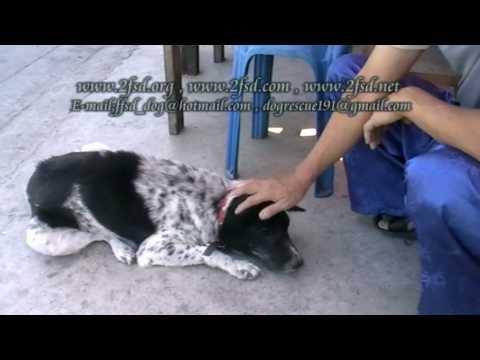 Dog rescue 191 Nasal VG.Tumor ซ.วัดวารีน้อย