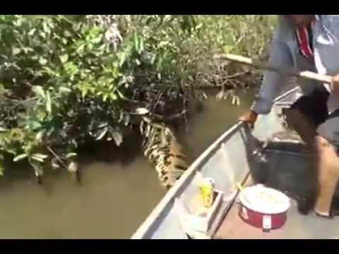 Hombre Jugando con una Anaconda