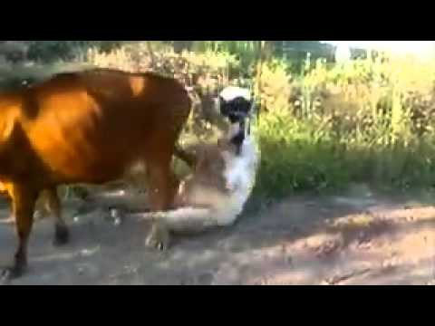 Ben 10 cow trying to fuck