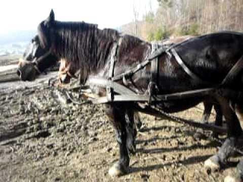 cai de tractiune din Barcani