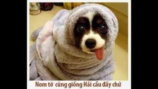 ANH DONG VAT HAI BA DAO NHAT