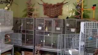 My Bird Room Tour May 2013