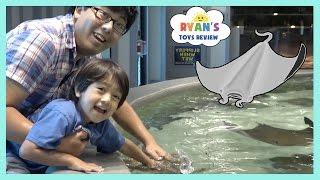 Stingray Feeding for Kids at the Aquarium!