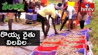 సగానికి పడిపోయిన రొయ్య ధర..! Price fall puts Shrimp Farmers In a Crisis |  Nela Talli | hmtv