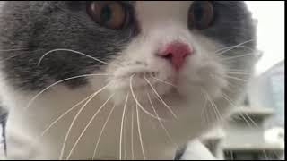 What is this cat saying?