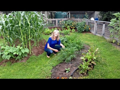Lessons From the Garden — With Kimberly Carter Gamble