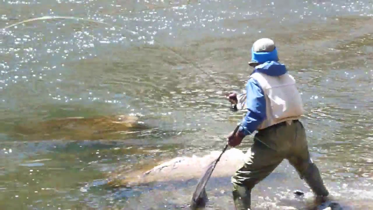 Andy kim rock on taylor river 0 weight rod big brown trout for Taylor fly fishing
