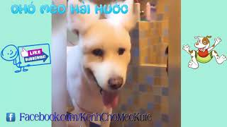 Những chú chó hài hước dễ thương và thông minh nhất thế giới   Cute and funny dogs compilation