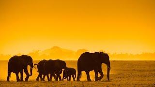 Kenya Safari Holidays | Safari Holidays | Kuoni