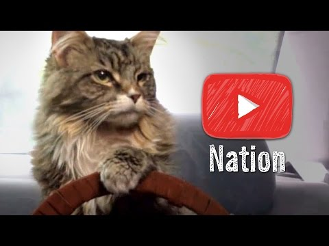 13 Cat Videos That Justify the Internet