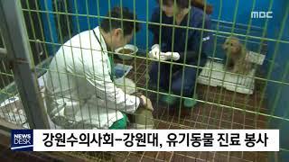 강원수의사회, 유기동물 진료 봉사