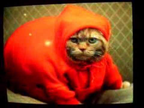 Fat Meatball Fat Cat Meatball