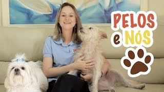 Juliana de Almeida - Dicas para cuidar do pelo do seu cachorro em casa